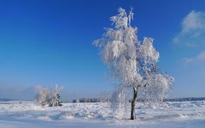winter, tree, landscape
