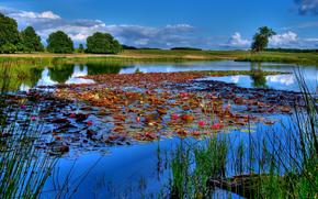 景观, 湖, 河, 天空, 钓鱼, 百合, 水