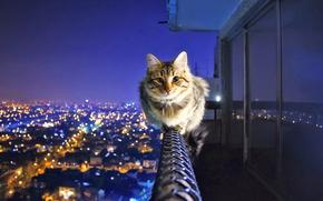 gatto, ringhiera, città, sera, bilanciare, volare in alto, funerali a sue spese