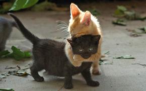 gatto, Gattini, abbraccio