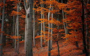 autumn, forest, fall, trees