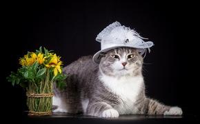 Animals, animal, cats, cat, flowers, Flower, bouquet