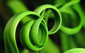 erba, verdura, foto