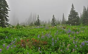radura, Fiori, alberi, abete rosso, nebbia, natura, paesaggio