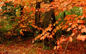 otoño, árboles, naturaleza