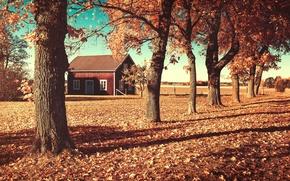 autumn, home, trees, landscape