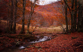autumn, forest, trees, small river, landscape