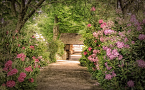 parque, arbusto, Rododendros, passeio, árvores, HDR