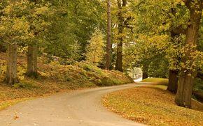 carretera, árboles, otoño, paisaje