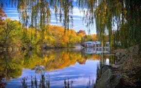 центральный парк Нью-Йорка, осень, пруд, деревья