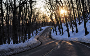 road, winter, trees, landscape