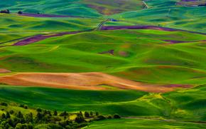 bea, Hills, vue du haut, paysage