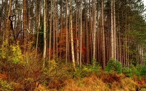 осень, лес, деревья, природа
