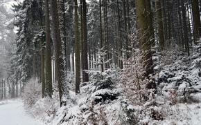 invierno, bosque, árboles, naturaleza