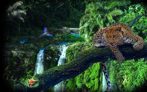 amazon jungl, albero, leopard, Pappagalli