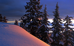 冬, 木, 丘, 風景
