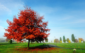 autunno, parco, stradale, albero, paesaggio