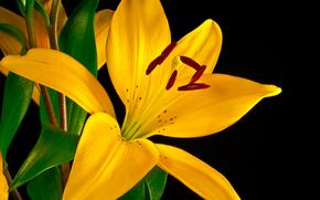 百合, 花, 植物群