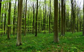 лес, деревья, пейзаж