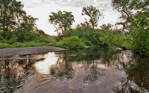 河, 树, 性质