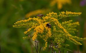 花卉, 蜜蜂, 宏