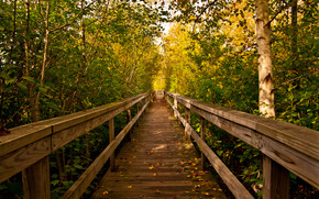 桥, 树, 景观