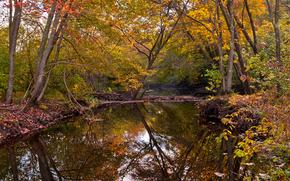 秋, 河, 树, 景观