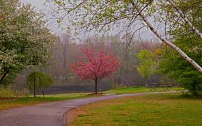 花园, 公园, 道路, 树, 景观