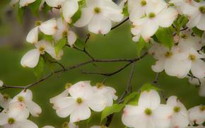 支, 花卉, 植物群