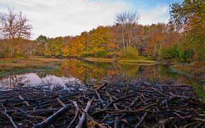 河, 秋, 坝, 树, 景观