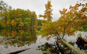 autunno, alberi, lago, paesaggio