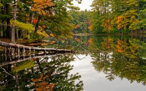 秋, 树, 湖, 景观