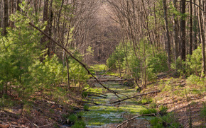 森林, 树, 水跳, 景观