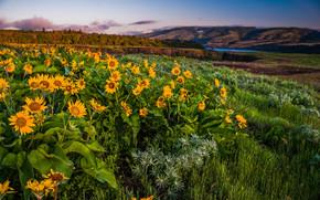 Columbia Gorge, Oregon, Hills, Flowers, landscape