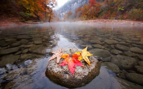 autumn, fall, nature, river, leaves, colorful