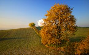 campo, collina, albero, autunno, paesaggio
