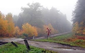 осень, железная дорога, деревья, дорога, лужи, пейзаж