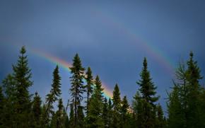 деревья, ели, небо, радуга, природа