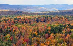 autunno, alberi, Vermont, USA, natura, paesaggio