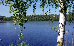 lake, forest, birch, BRANCH, landscape