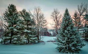 inverno, alberi, tramonto, abete rosso, paesaggio