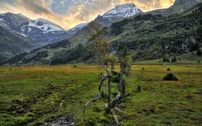 campo, Montagne, Alpi, paesaggio