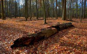 осень, лес, деревья, пейзаж