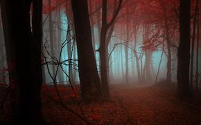 осень, деревья, туман, пейзаж