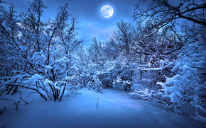 Merry Christmas, new year, magic christmas night, Christmas Tree