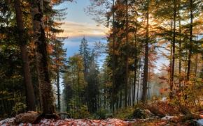 foresta, alberi, autunno, paesaggio