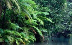 Daintree National Park, Australia, лес, река, природа