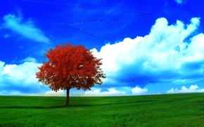 поле, дерево, 3d, art
