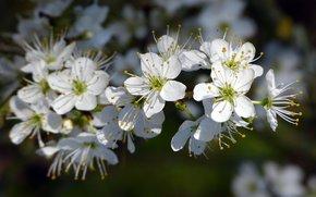 Fiori, FILIALE, flora