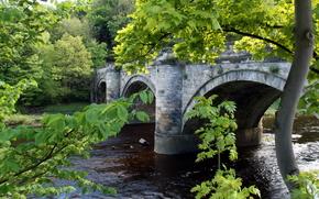 bridge, river, trees, landscape